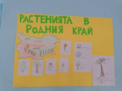 """Проекти на 1. В - """"Растенията в родния край"""" - Изображение 1"""